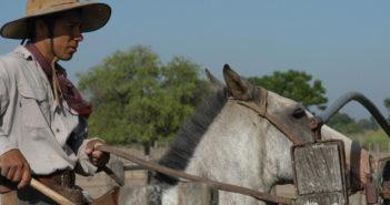 El precio de la tierra en el Chaco