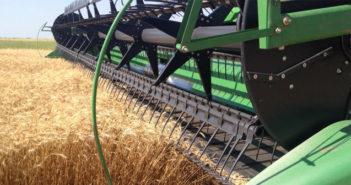 cosecha-trigo